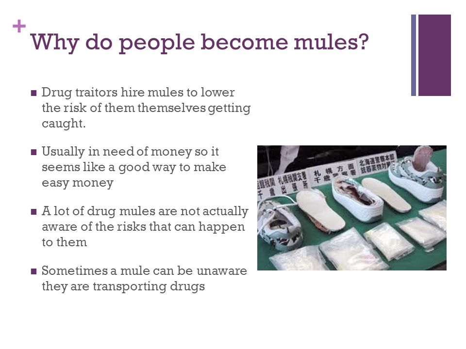 + Why do people become mules.