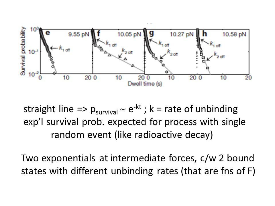 Two exponentials at intermediate forces, c/w 2 bound states with different unbinding rates (that are fns of F) straight line => p survival  e -kt ; k = rate of unbinding exp'l survival prob.