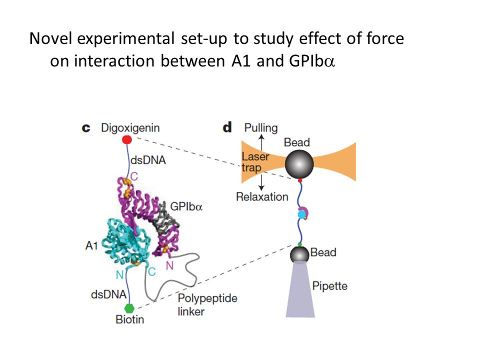 Novel experimental set-up to study effect of force on interaction between A1 and GPIb 