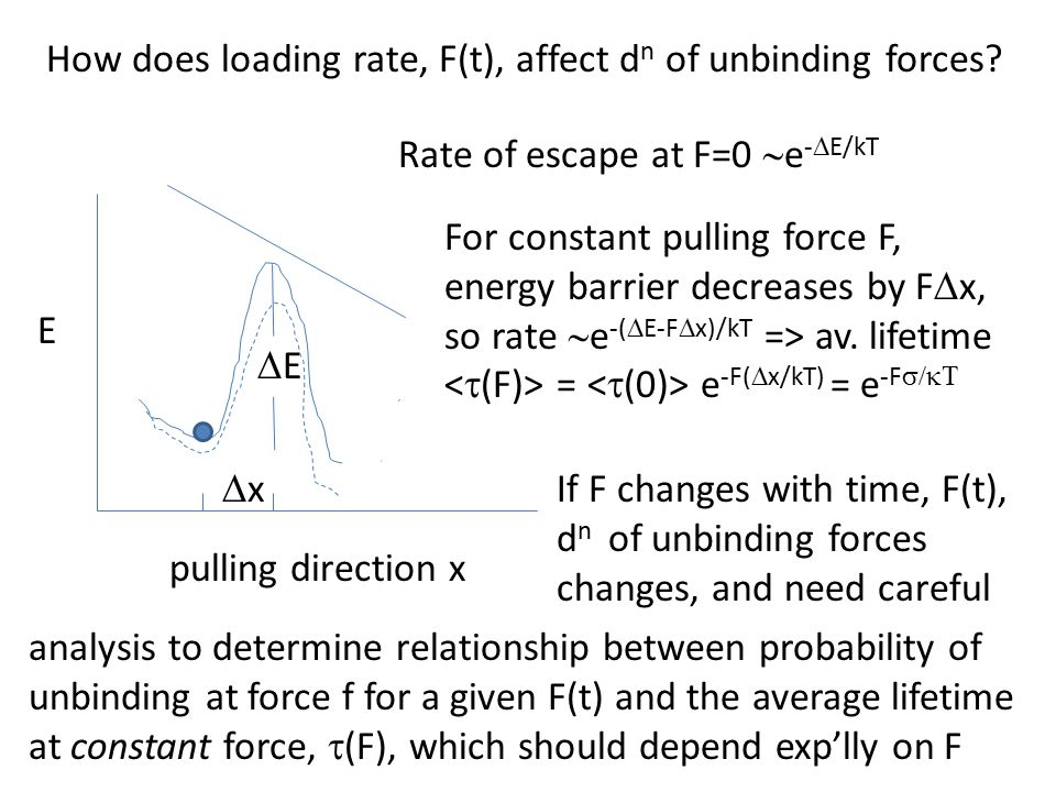 How does loading rate, F(t), affect d n of unbinding forces.