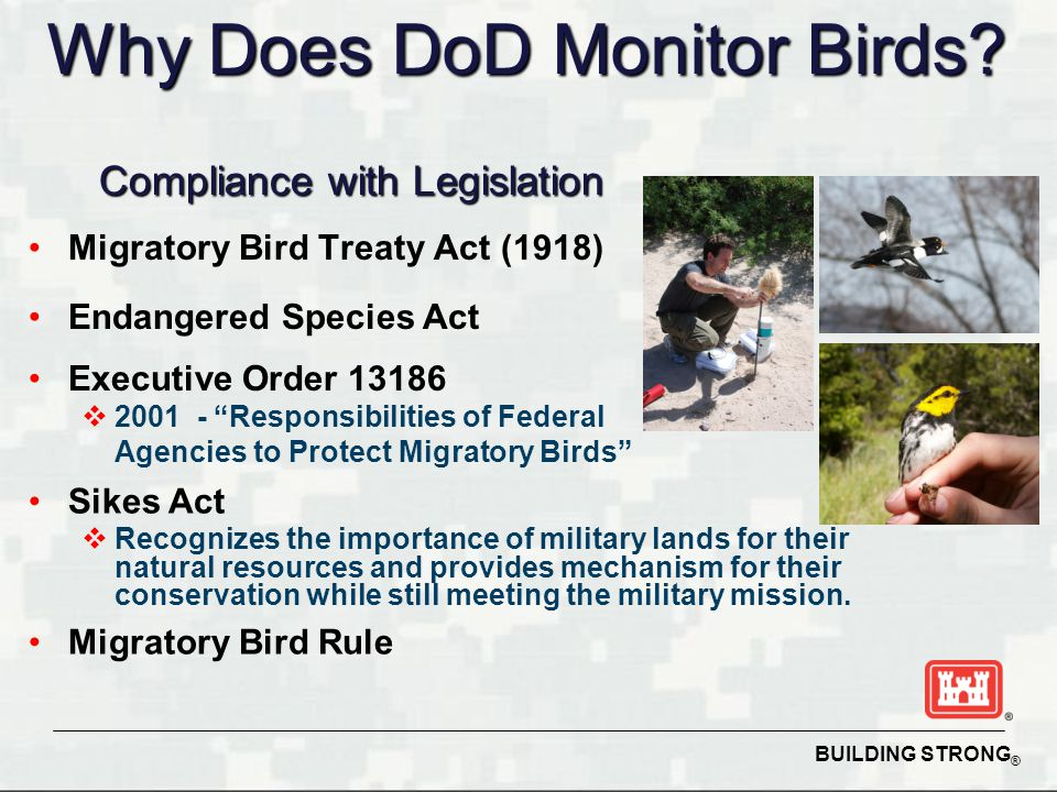 BUILDING STRONG ® Migratory Bird Treaty Act (1918) Endangered Species Act Executive Order 13186  2001 - Responsibilities of Federal Agencies to Protect Migratory Birds Sikes Act  Recognizes the importance of military lands for their natural resources and provides mechanism for their conservation while still meeting the military mission.