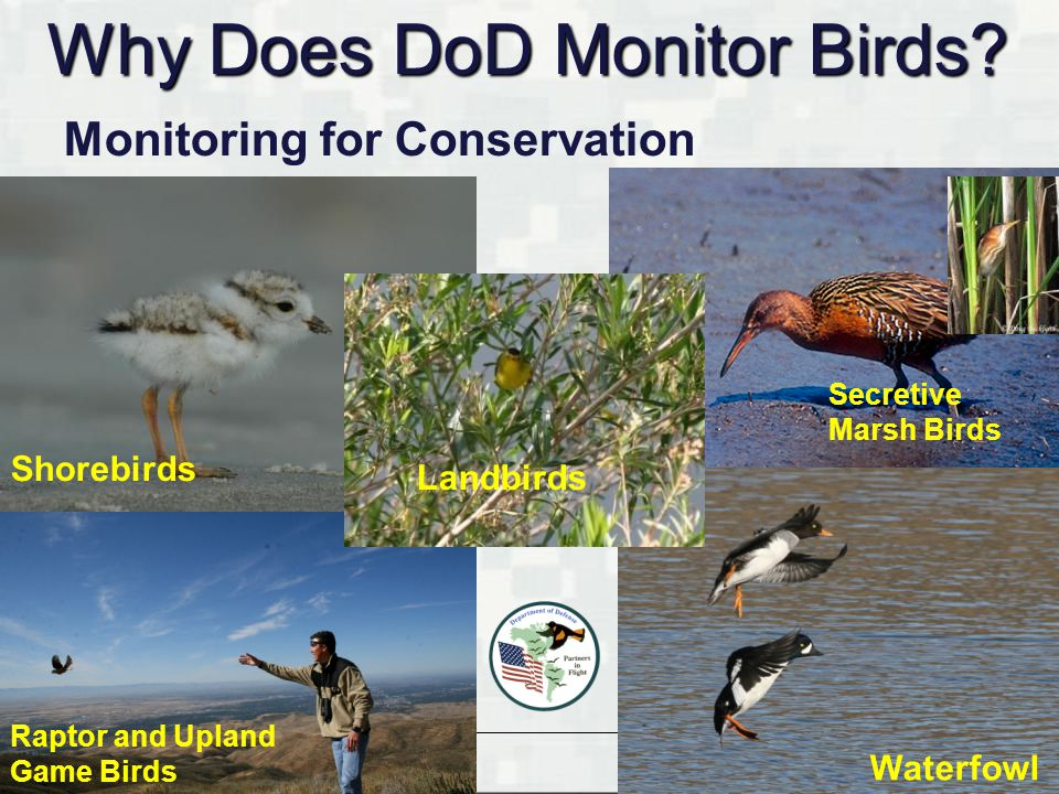 BUILDING STRONG ® Monitoring for Conservation Why Does DoD Monitor Birds? Shorebirds Waterfowl Secretive Marsh Birds Raptor and Upland Game Birds Land