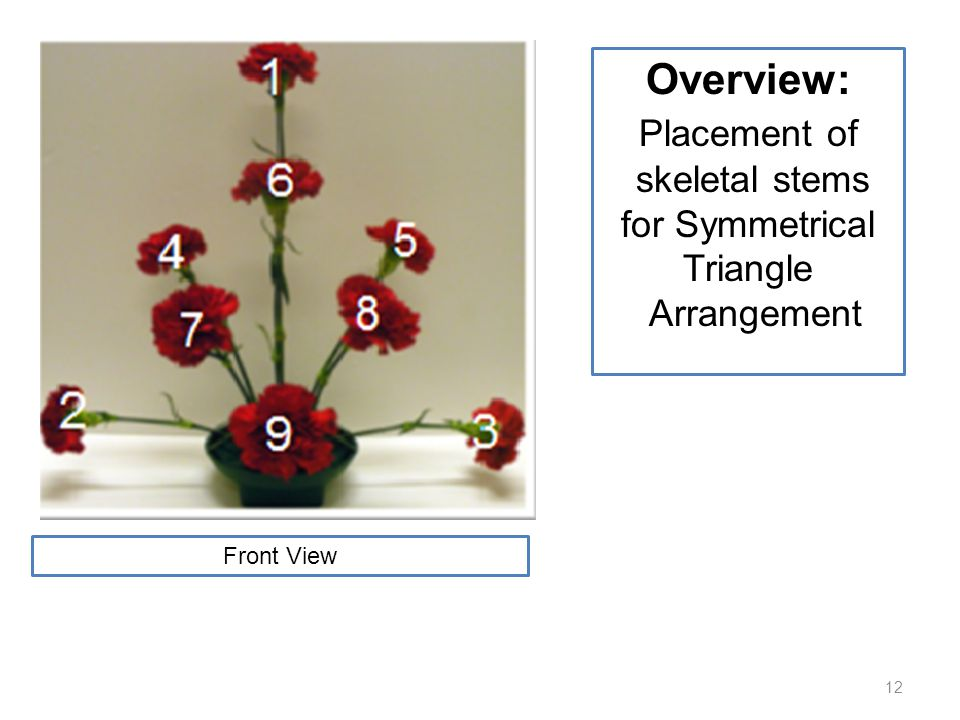 12 Overview: Placement of skeletal stems for Symmetrical Triangle Arrangement Front View