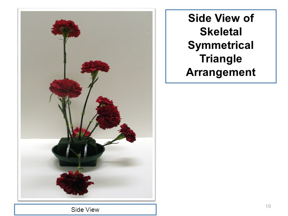 19 Side View of Skeletal Symmetrical Triangle Arrangement Side View