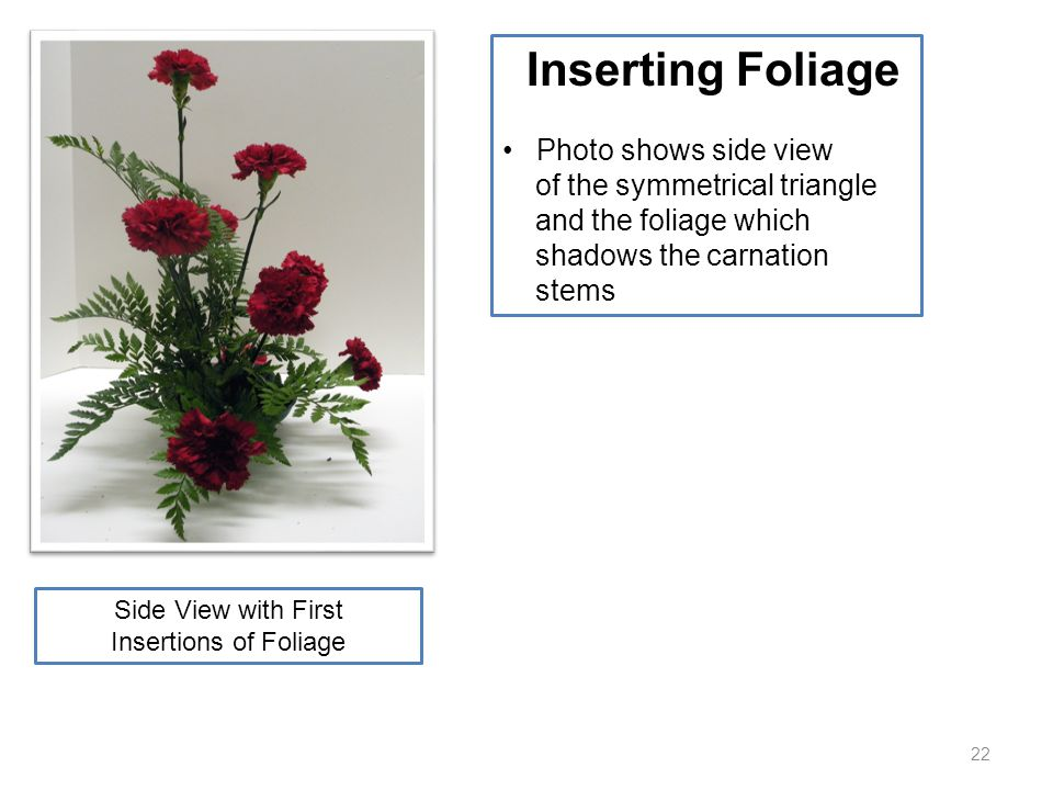 22 Inserting Foliage Photo shows side view of the symmetrical triangle and the foliage which shadows the carnation stems Side View with First Insertio