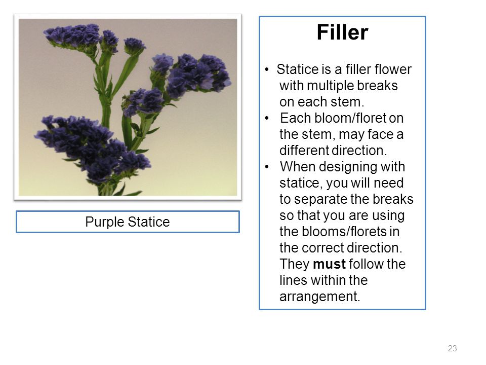 23 Filler Statice is a filler flower with multiple breaks on each stem. Each bloom/floret on the stem, may face a different direction. When designing