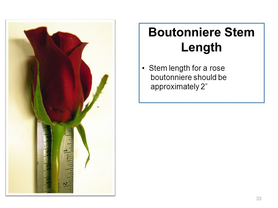 """33 Boutonniere Stem Length Stem length for a rose boutonniere should be approximately 2"""""""
