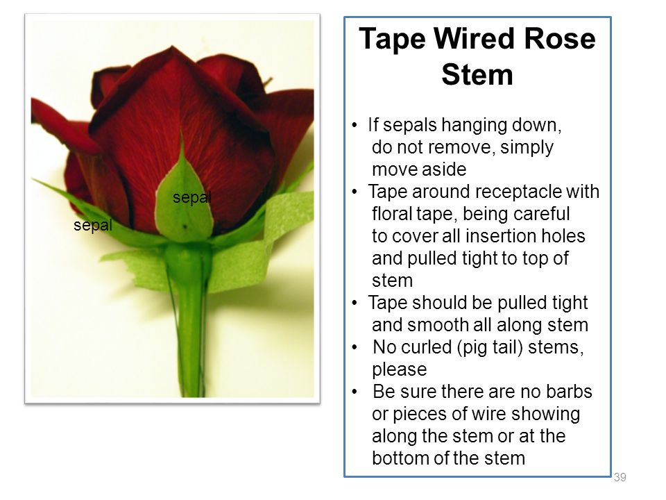 39 Tape Wired Rose Stem If sepals hanging down, do not remove, simply move aside Tape around receptacle with floral tape, being careful to cover all i