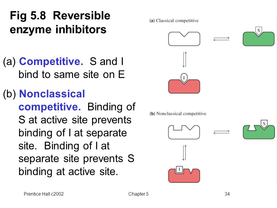 Prentice Hall c2002Chapter 534 Fig 5.8 Reversible enzyme inhibitors (a) Competitive.