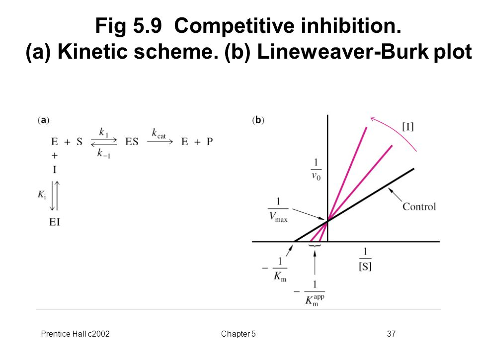Prentice Hall c2002Chapter 537 Fig 5.9 Competitive inhibition.