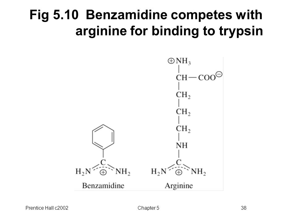 Prentice Hall c2002Chapter 538 Fig 5.10 Benzamidine competes with arginine for binding to trypsin