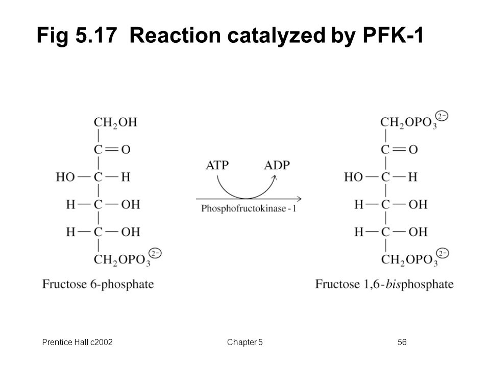 Prentice Hall c2002Chapter 556 Fig 5.17 Reaction catalyzed by PFK-1