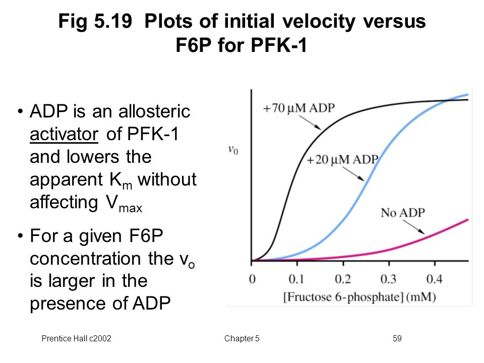 Prentice Hall c2002Chapter 559 Fig 5.19 Plots of initial velocity versus F6P for PFK-1 ADP is an allosteric activator of PFK-1 and lowers the apparent K m without affecting V max For a given F6P concentration the v o is larger in the presence of ADP