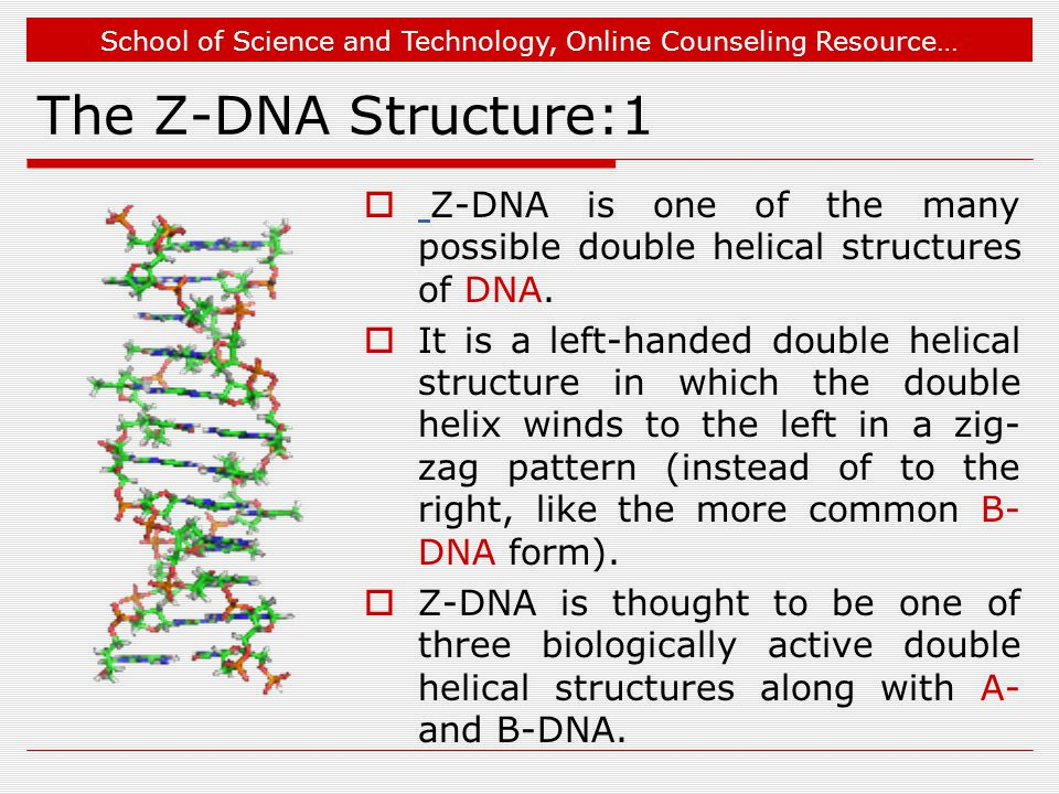 School of Science and Technology, Online Counseling Resource… The Z-DNA Structure:1  Z-DNA is one of the many possible double helical structures of DNA.