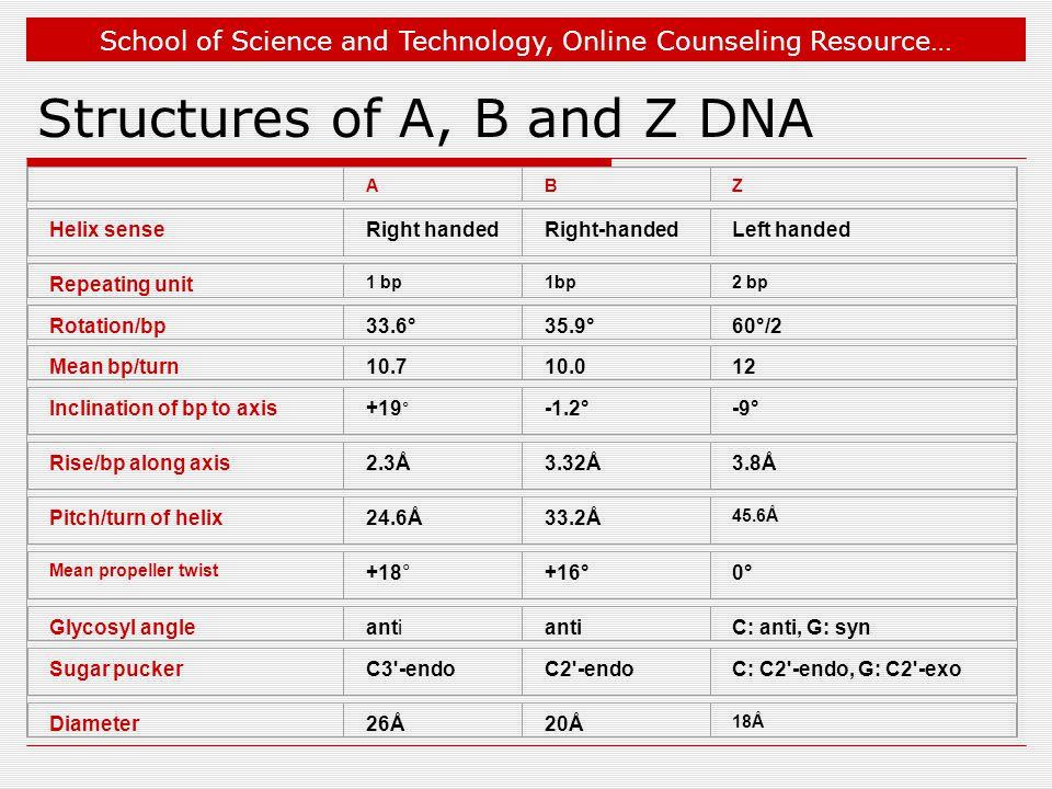 School of Science and Technology, Online Counseling Resource… ABZ Helix senseRight handedRight-handedLeft handed Repeating unit 1 bp 2 bp Rotation/bp33.6°35.9°60°/2 Mean bp/turn10.710.012 Inclination of bp to axis+19 ° -1.2°-9° Rise/bp along axis2.3Å3.32Å3.8Å Pitch/turn of helix24.6Å33.2Å 45.6Å Mean propeller twist +18°+16°0° Glycosyl angleanti C: anti, G: syn Sugar puckerC3 -endoC2 -endoC: C2 -endo, G: C2 -exo Diameter26Å20Å 18Å Structures of A, B and Z DNA
