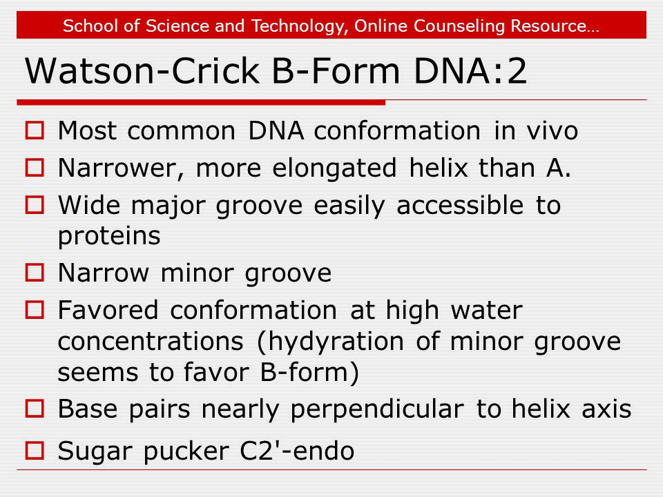 School of Science and Technology, Online Counseling Resource… Watson-Crick B-Form DNA:2  Most common DNA conformation in vivo  Narrower, more elongated helix than A.