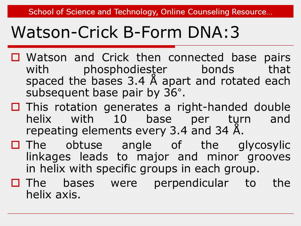 School of Science and Technology, Online Counseling Resource… Watson-Crick B-Form DNA:3  Watson and Crick then connected base pairs with phosphodiester bonds that spaced the bases 3.4 Å apart and rotated each subsequent base pair by 36°.