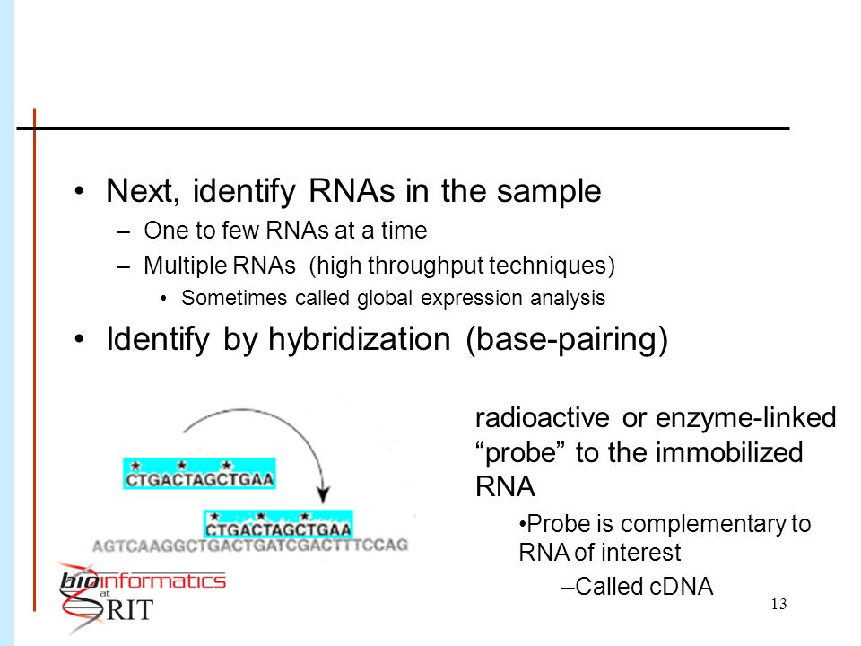 13 Next, identify RNAs in the sample –One to few RNAs at a time –Multiple RNAs (high throughput techniques) Sometimes called global expression analysi