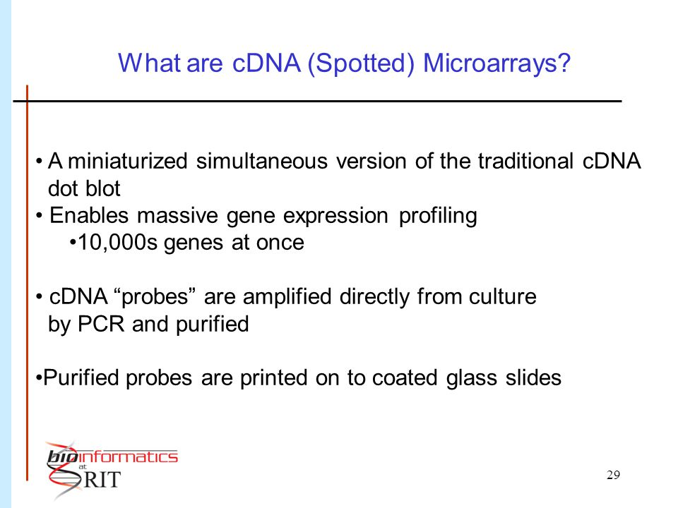 29 What are cDNA (Spotted) Microarrays.