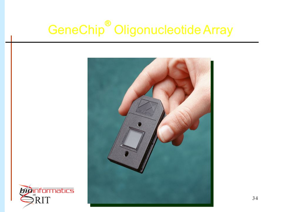 34 GeneChip ® Oligonucleotide Array