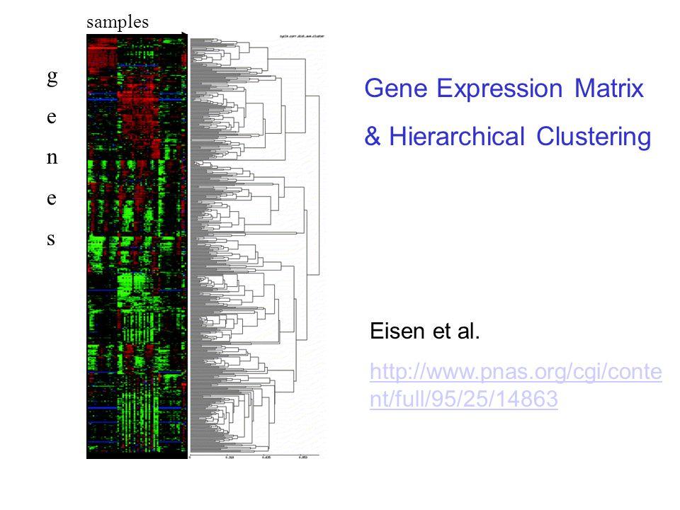 Eisen et al. http://www.pnas.org/cgi/conte nt/full/95/25/14863 samples genesgenes Gene Expression Matrix & Hierarchical Clustering