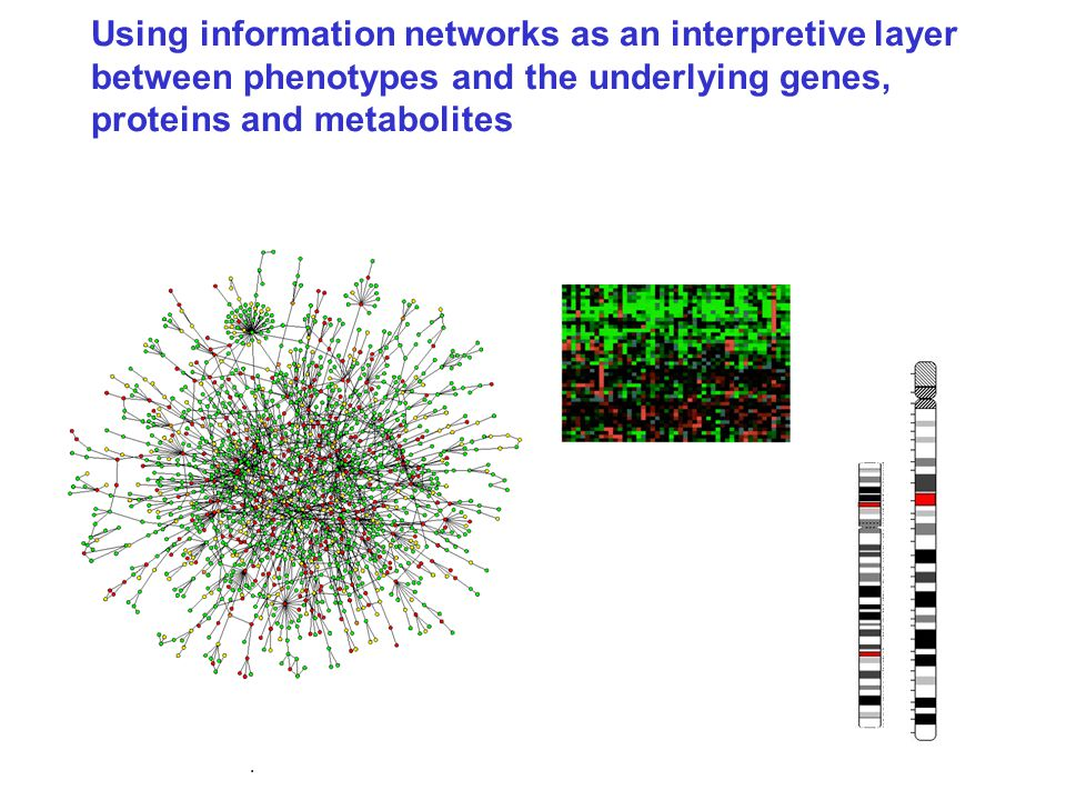 Using information networks as an interpretive layer between phenotypes and the underlying genes, proteins and metabolites Highly connected genes are often critical in the onset of cancer and metabolic diseases.