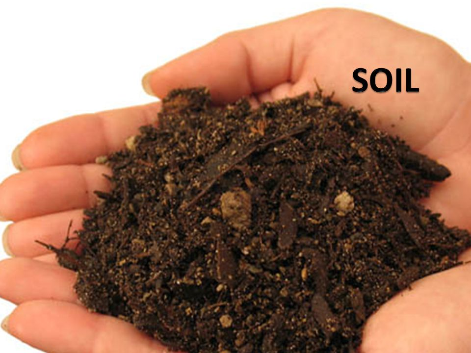 Why is soil important.