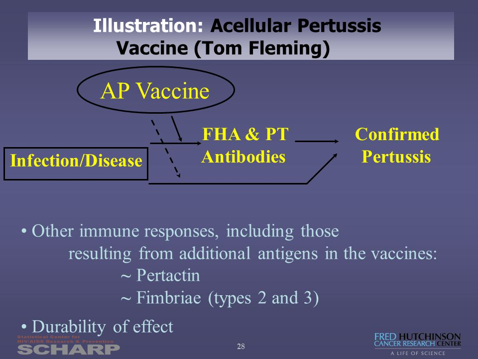 28 FHA & PT Confirmed Antibodies Pertussis AP Vaccine Infection/Disease Other immune responses, including those resulting from additional antigens in the vaccines: ~ Pertactin ~ Fimbriae (types 2 and 3) Durability of effect Illustration: Acellular Pertussis Vaccine (Tom Fleming)