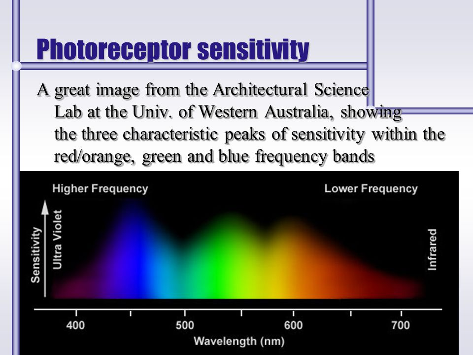 Photoreceptor sensitivity A great image from the Architectural Science Lab at the Univ. of Western Australia, showing the three characteristic peaks o