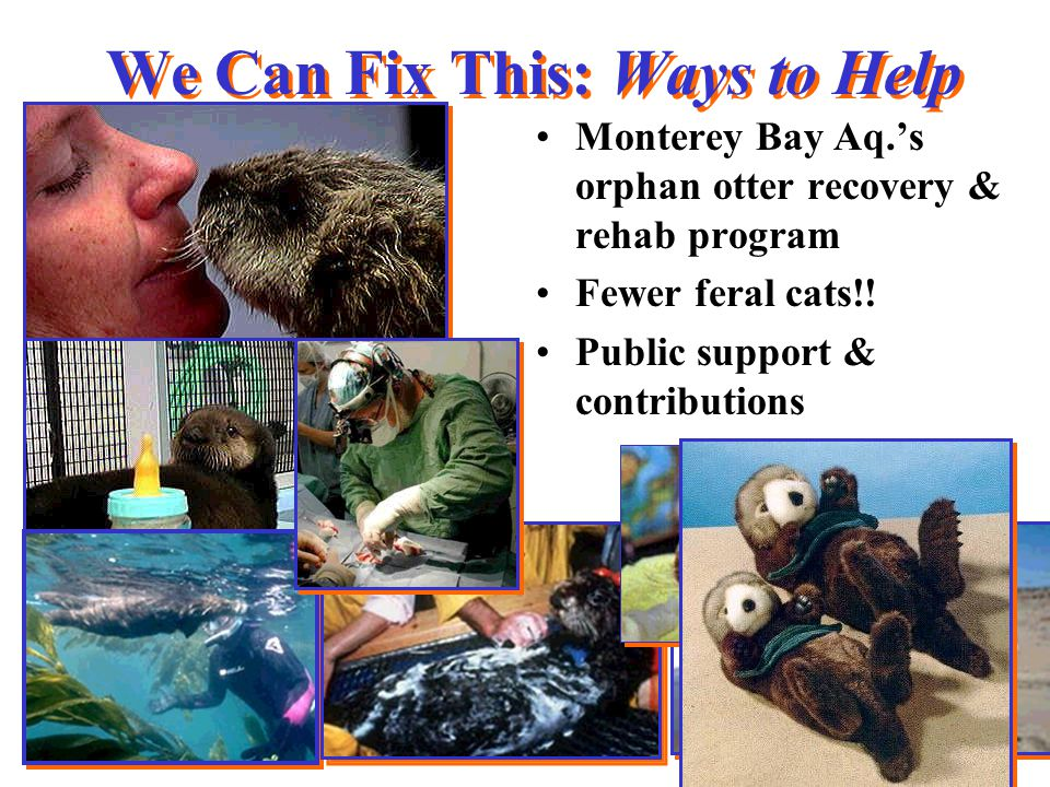 We Can Fix This: Ways to Help Monterey Bay Aq.'s orphan otter recovery & rehab program Fewer feral cats!.