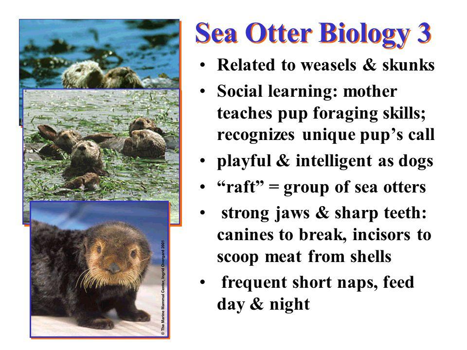 Sea Otter Ecology 1