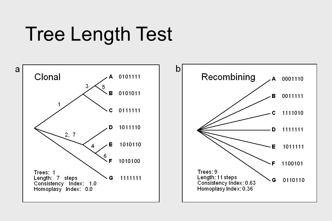 Tree Length Test