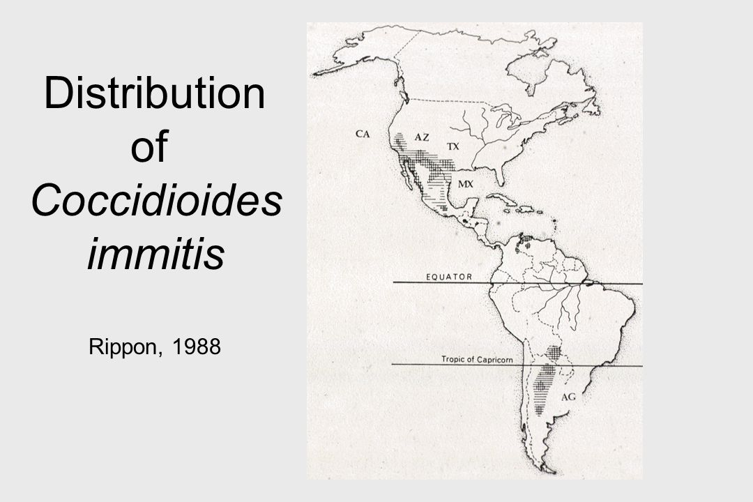 Distribution of Coccidioides immitis Rippon, 1988