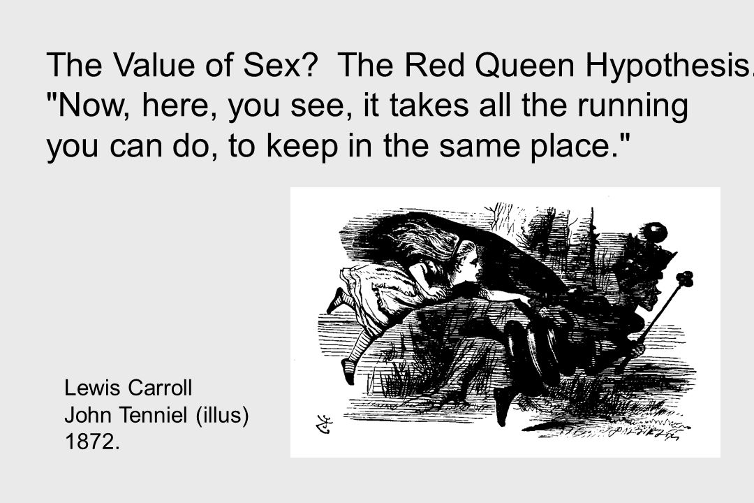 Lewis Carroll John Tenniel (illus) 1872. The Value of Sex? The Red Queen Hypothesis.