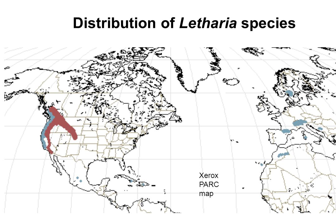 Distribution of Letharia species Xerox PARC map