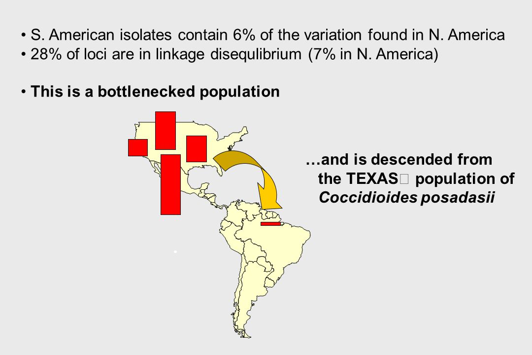S. American isolates contain 6% of the variation found in N. America 28% of loci are in linkage disequlibrium (7% in N. America) This is a bottlenecke