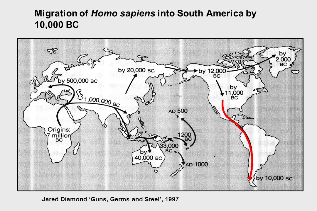 Migration of Homo sapiens into South America by 10,000 BC Jared Diamond 'Guns, Germs and Steel', 1997