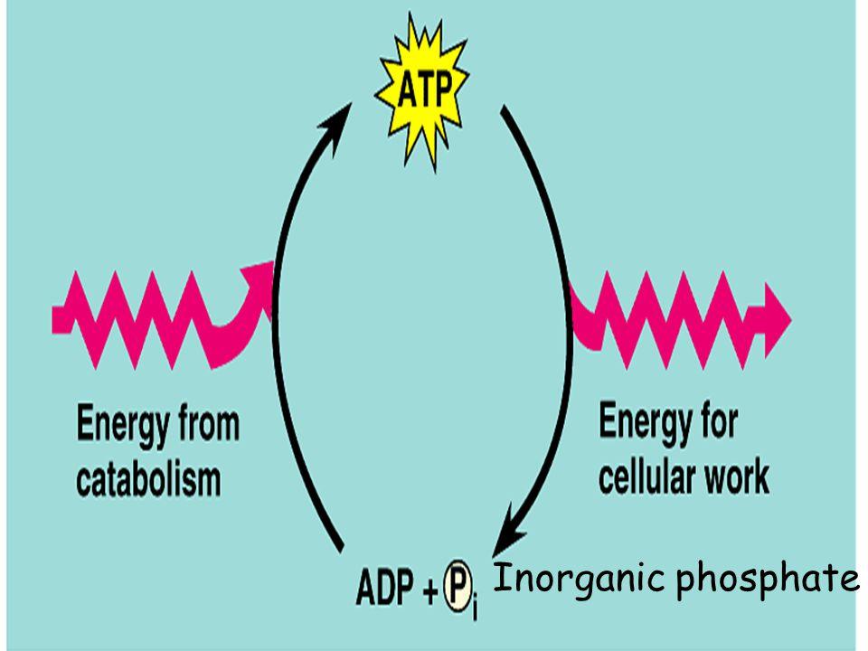Inorganic phosphate