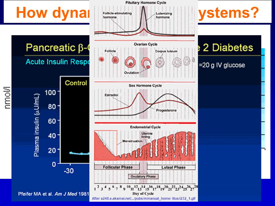 How dynamic are these systems.Hormone, receptor, transducer & effector levels vary with time.