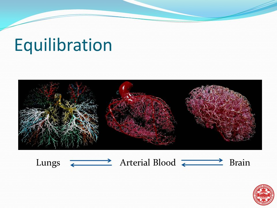 Equilibration Lungs Arterial Blood Brain