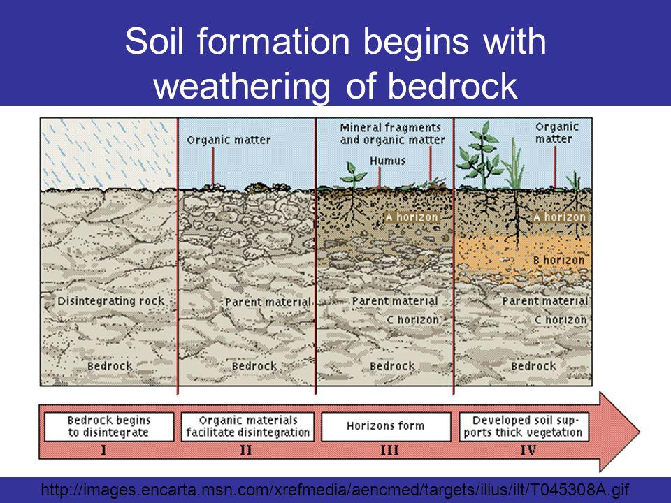 http://images.encarta.msn.com/xrefmedia/aencmed/targets/illus/ilt/T045308A.gif Soil formation begins with weathering of bedrock