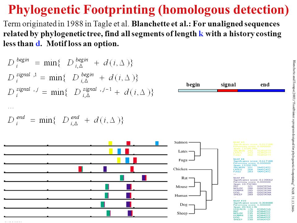 "Phylogenetic Footprinting (homologous detection) Blanchette and Tompa (2003) ""FootPrinter: a program designed for phylogenetic footprinting"" NAR 31.13"