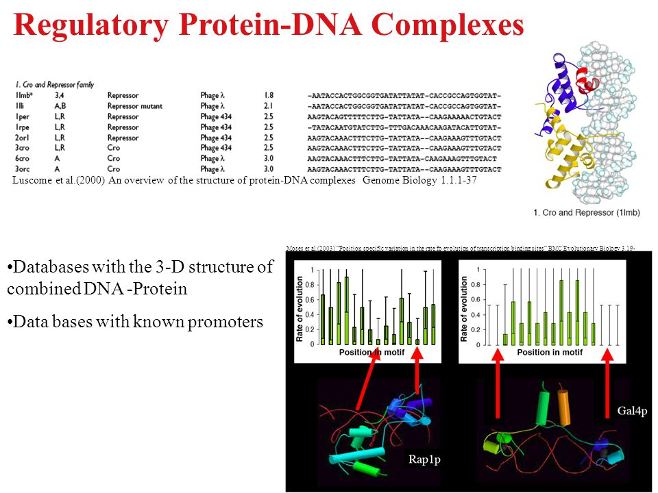 Regulatory Protein-DNA Complexes Luscome et al.(2000) An overview of the structure of protein-DNA complexes Genome Biology 1.1.1-37 Moses et al.(2003)