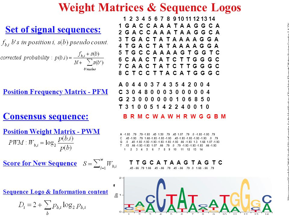 "Weight Matrices & Sequence Logos Wasserman and Sandelin (2004) 'Applied Bioinformatics for the Identification of Regulatory Elements"" Nature Review Ge"
