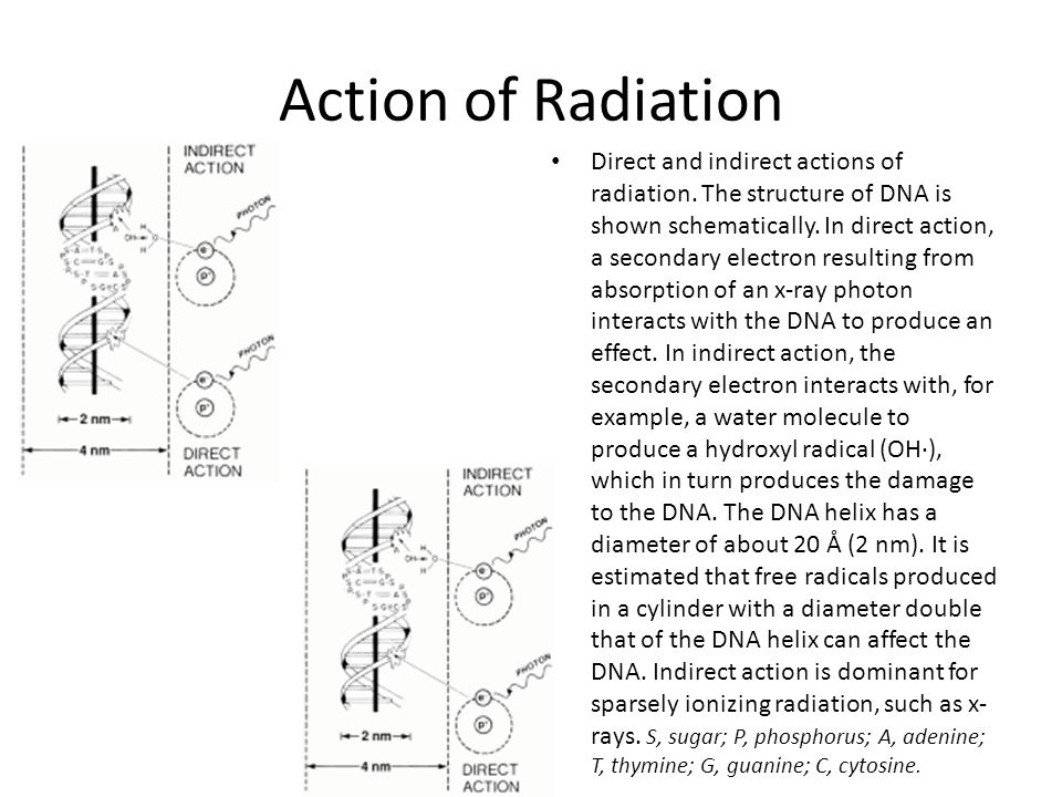 Action of Radiation Direct and indirect actions of radiation.