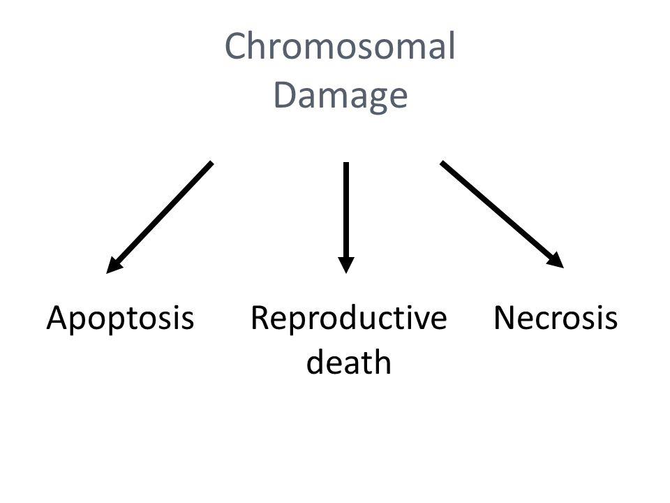 Chromosomal Damage ApoptosisReproductive death Necrosis