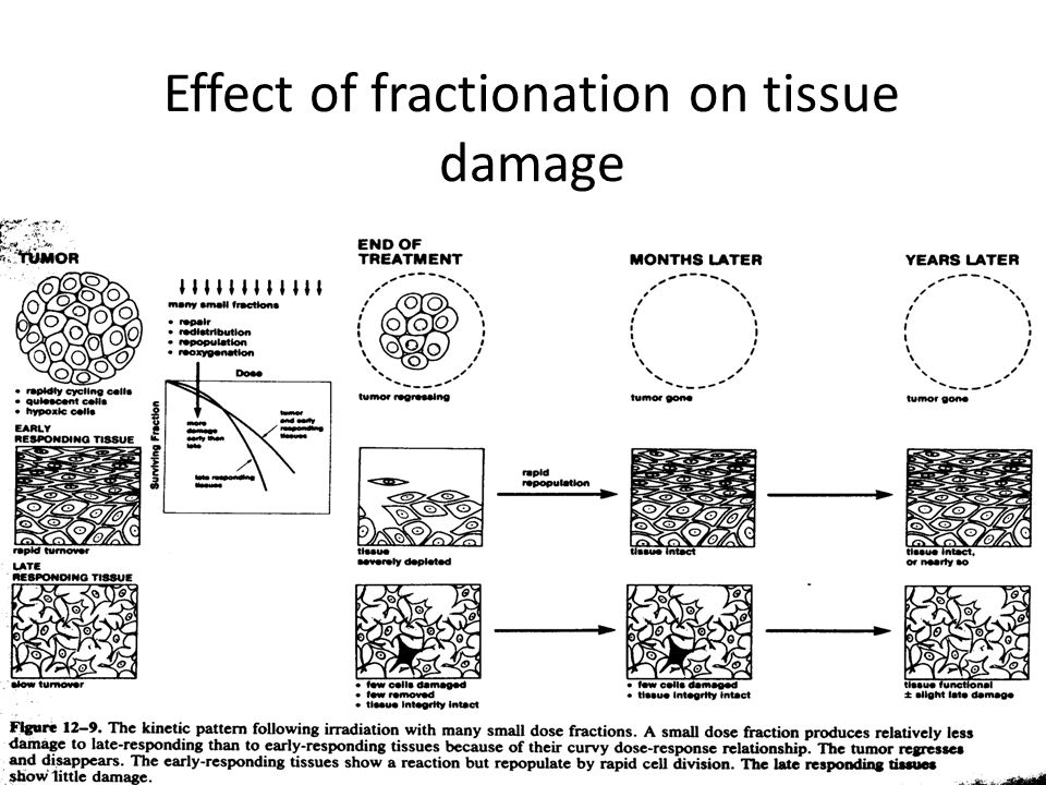 Effect of fractionation on tissue damage
