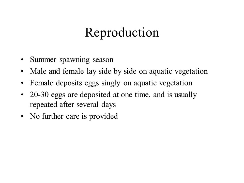 Reproduction Summer spawning season Male and female lay side by side on aquatic vegetation Female deposits eggs singly on aquatic vegetation 20-30 eggs are deposited at one time, and is usually repeated after several days No further care is provided