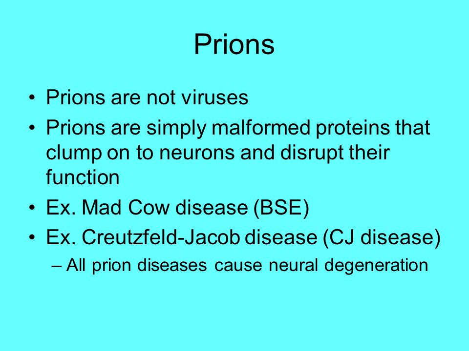 Prions Prions are not viruses Prions are simply malformed proteins that clump on to neurons and disrupt their function Ex. Mad Cow disease (BSE) Ex. C