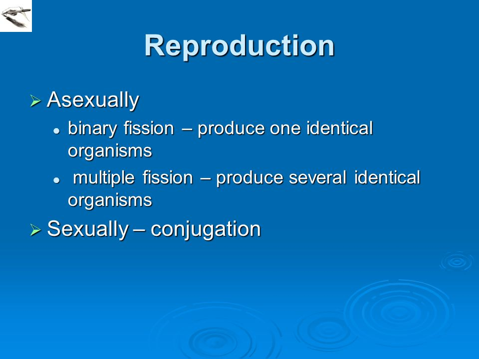 Reproduction  Asexually binary fission – produce one identical organisms binary fission – produce one identical organisms multiple fission – produce